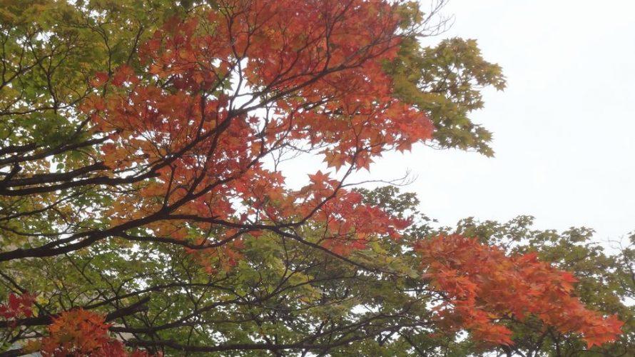 散歩撮影実習 10月6日(土)